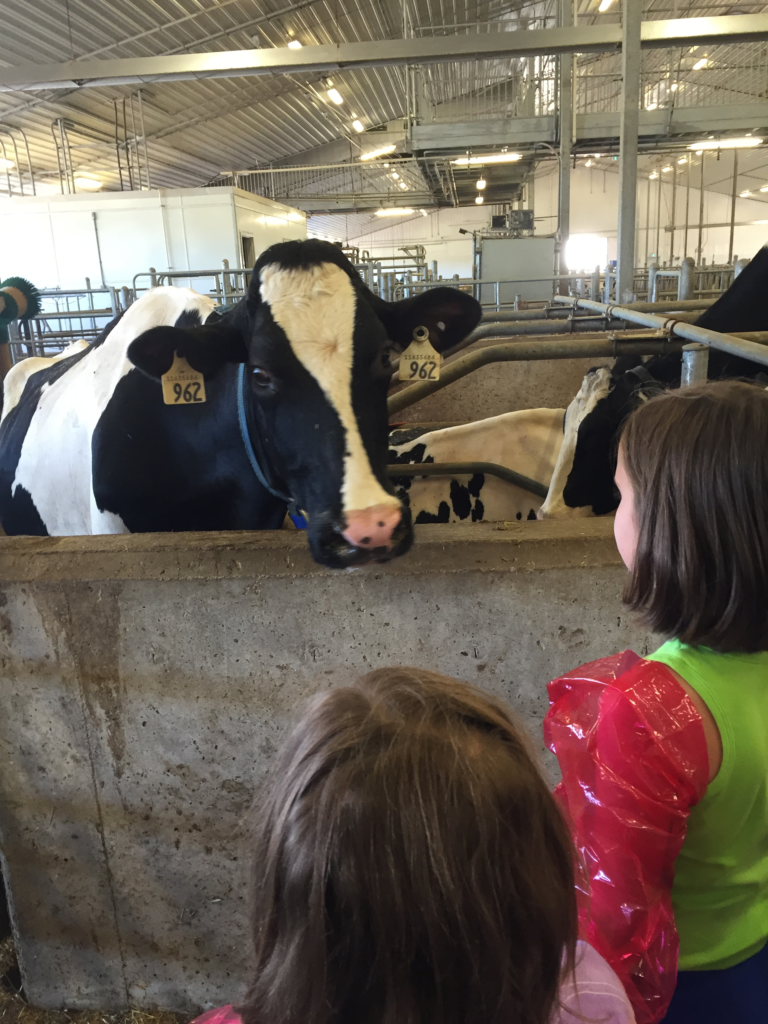Participants in the AgBio Discovery Camp meet a variety of livestock during their time on campus.