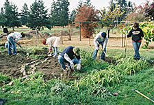Several people working together at a community garden.