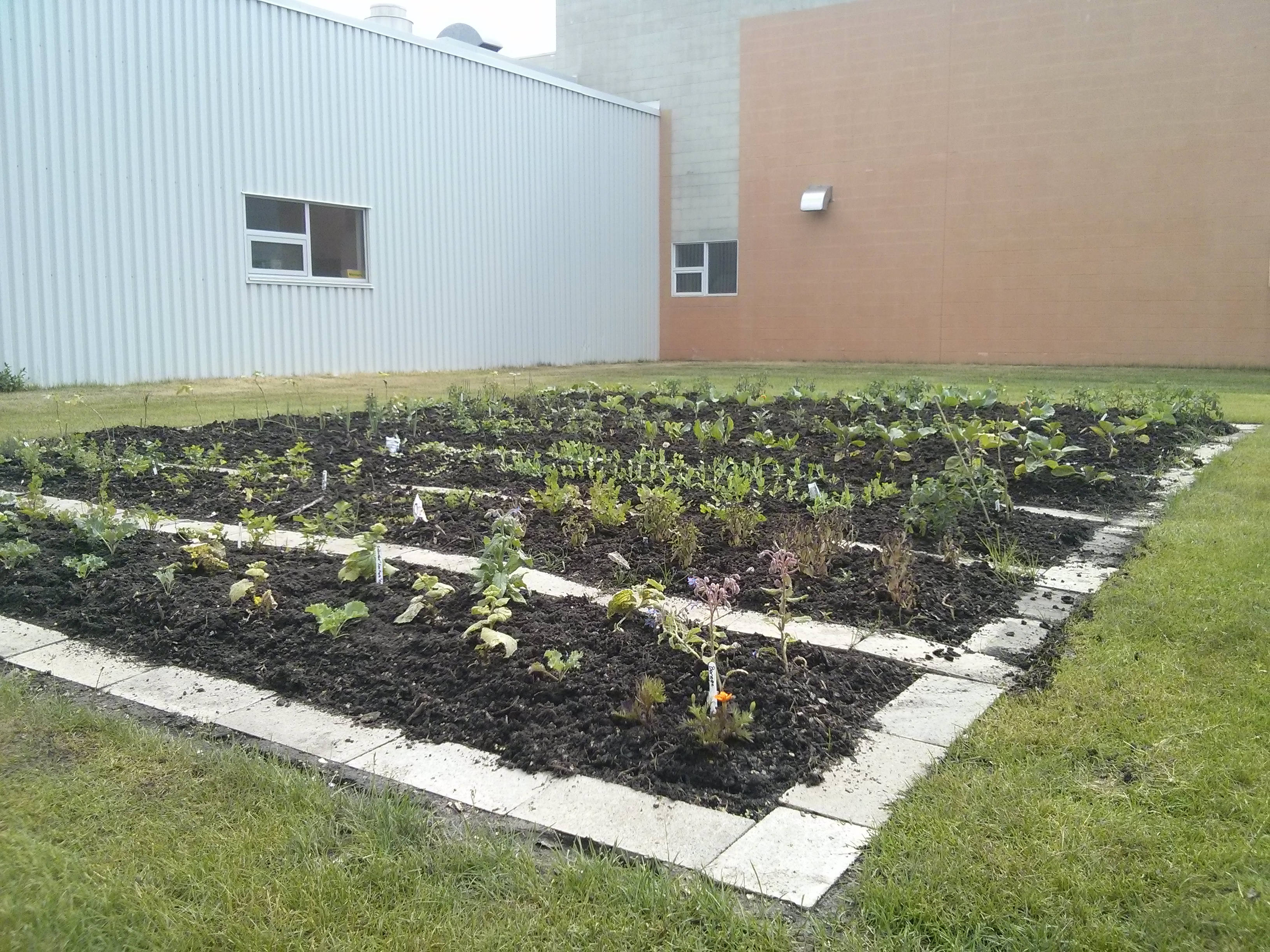A picture of the FMD Community Garden