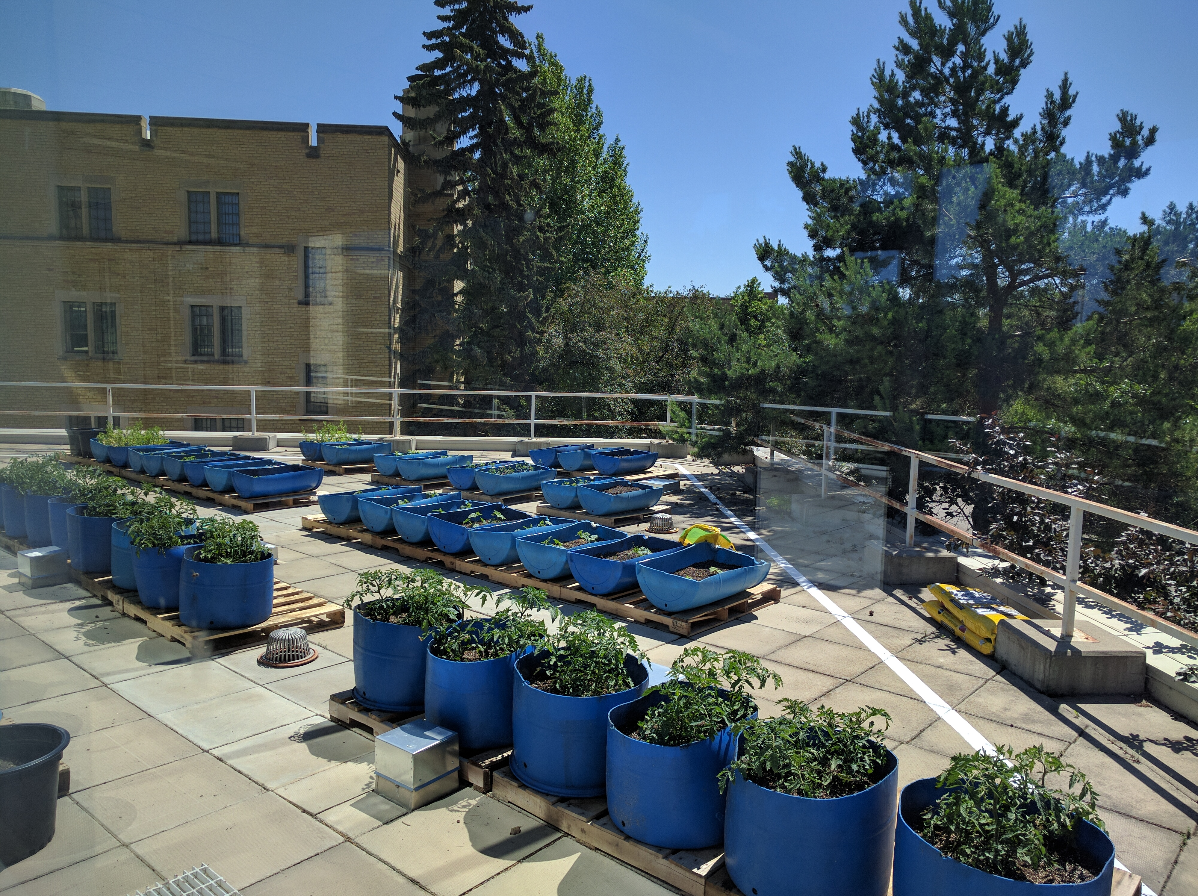 The RoofTop urban agriculture garden